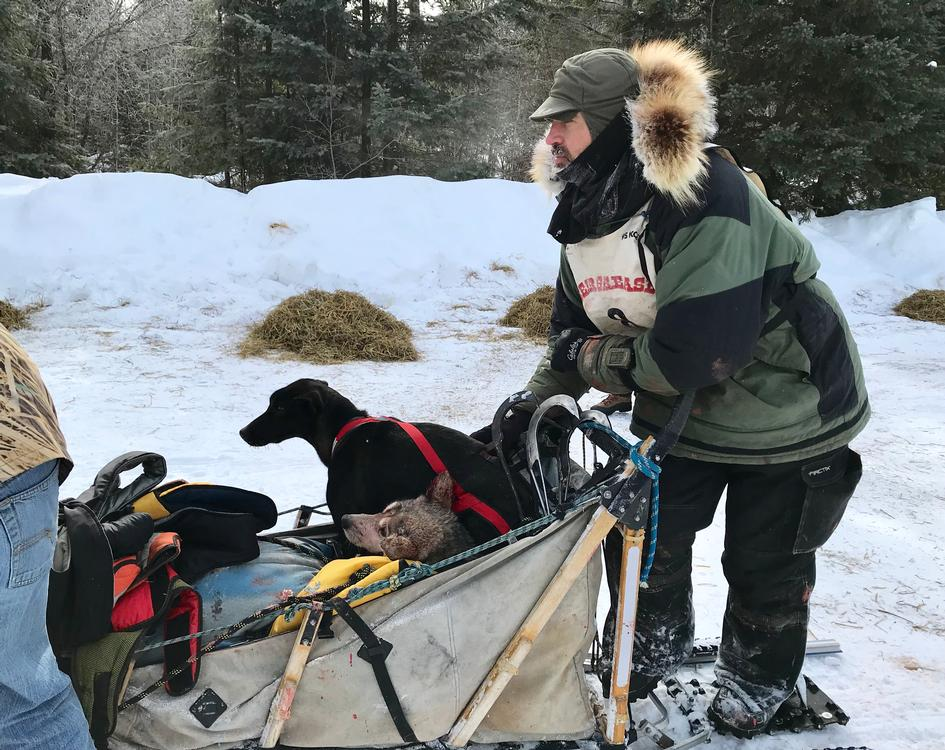Kevin Mathis arrives at Trail Center with two dogs in the sled. Mathis scratched at this checkpoint.