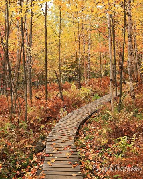 Boardwalk on the Laurentian Divide near Virginia