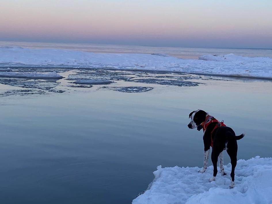 Cleo, a rescue pup loves exploring the shores of Lake Superior