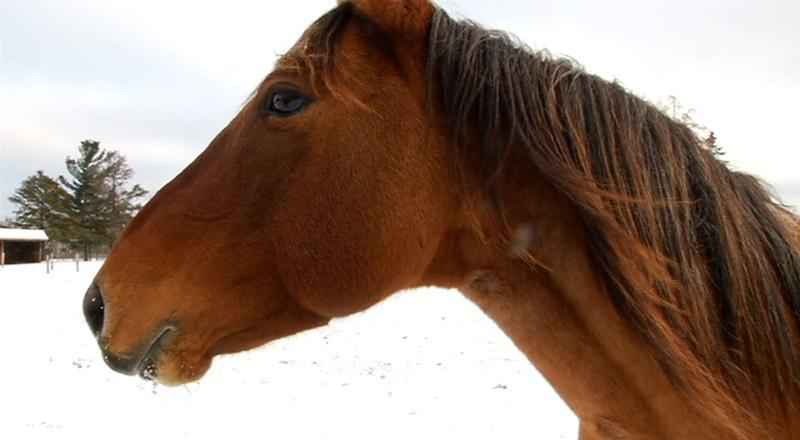 Legislators in Nebraska are considering whether to scrap a law that requires a license to massage a horse.