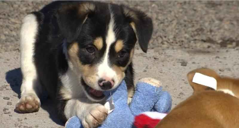 Local Shelters Raise Awareness of Adoption on National Puppy Day