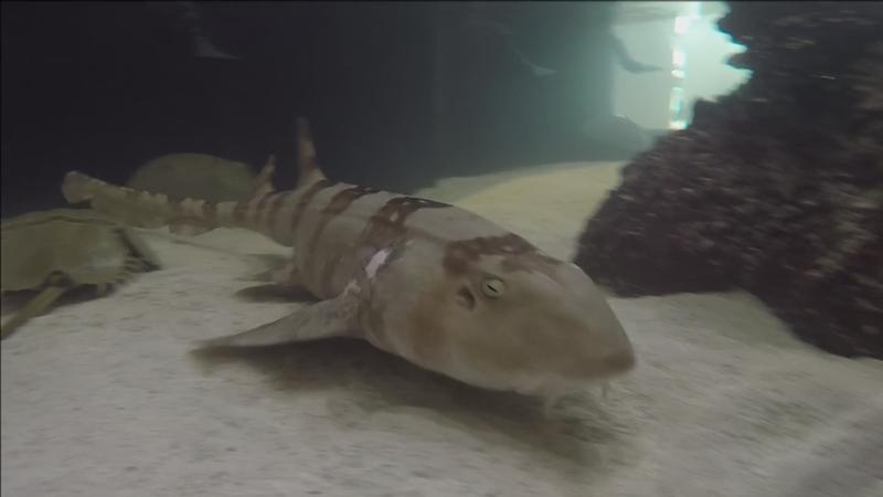 Great Lakes Aquarium Adding Shark Touch Pool Exhibit