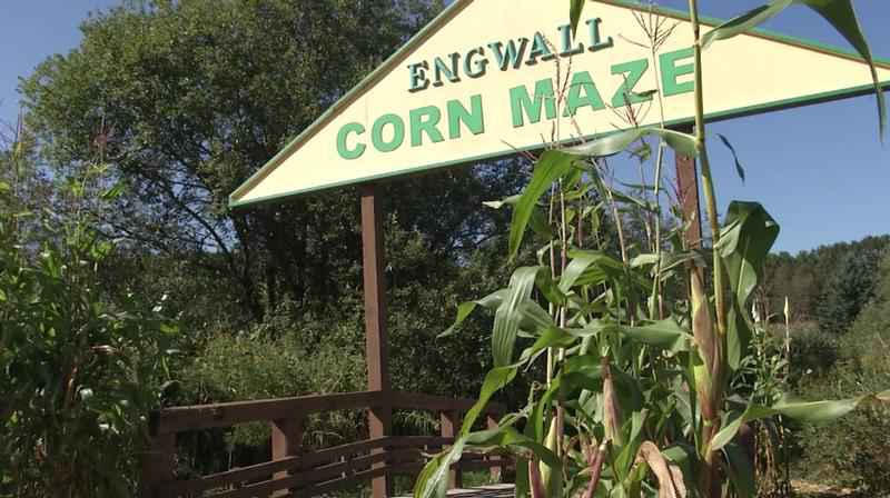 Engwalls Corn Maze is closing after this weekend.
