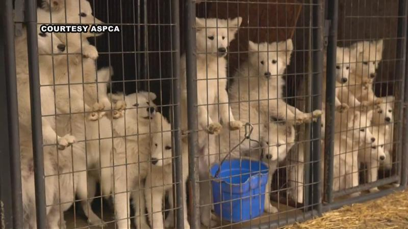 Nearly 170 Neglected Dogs Seized from Iowa Puppy Mill