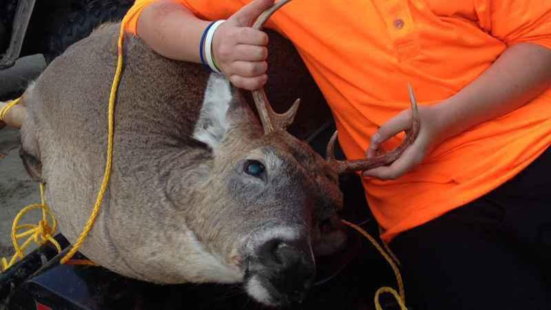 Wisconsin's deer harvest was up 7 percent this year.