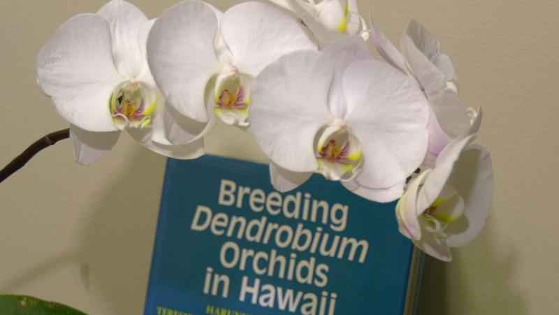 UMD hosted the Orchid Unveiled event in the Planetarium building on Valentine's Day.