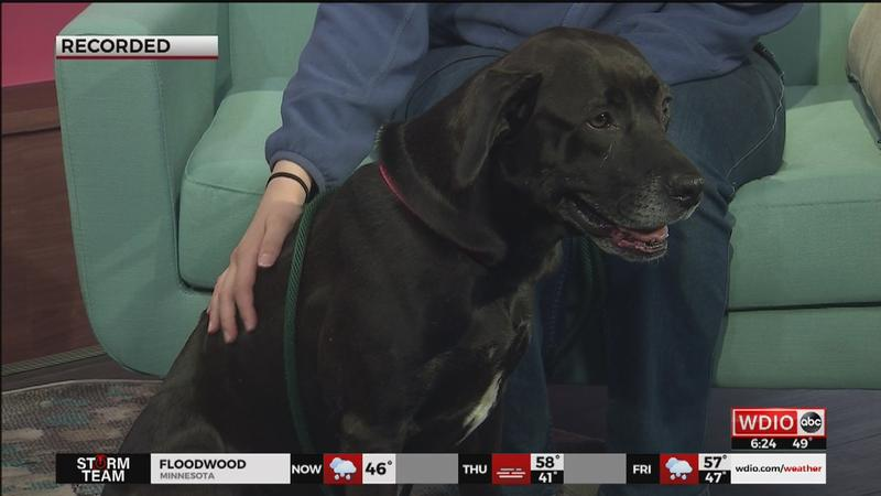 Olive has completed the trifecta of appearances on Good Morning Northland. However, as much as we love seeing her beautiful face each time, she still needs a forever home.�