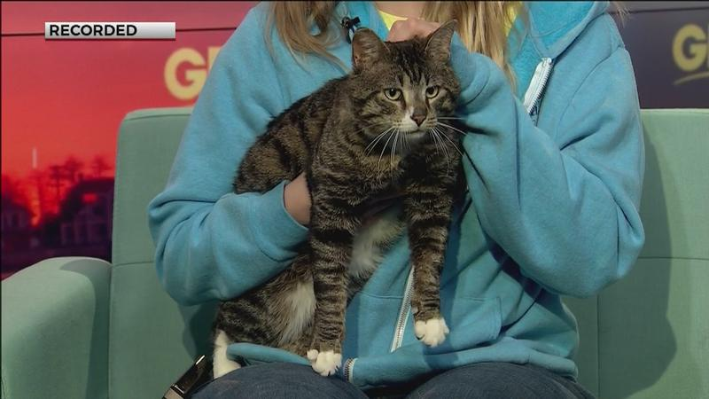 Animal Allies Humane Society in Duluth has an eager 4-year-old cat hoping to find a new forever home.