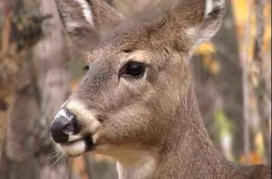 DNR Expands Feeding Bands to Fight CWD