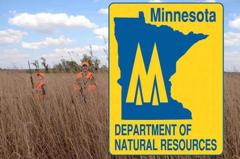 Snowstorms, Heavy Rains, Take Toll on Minnesota Pheasants