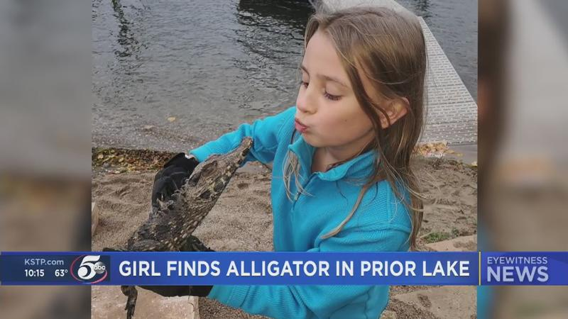 9-year-old Quinlynn Lehrman pulled an alligator out of Prior Lake Friday and now the DNR has picked up the alligator the following day.