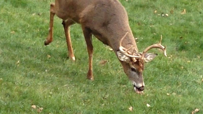 Wisconsin's 9-day Gun Deer Season to Begin Saturday