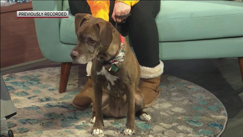 Cocoa is so sweet!  Adopt her at Animal Allies Humane Society.