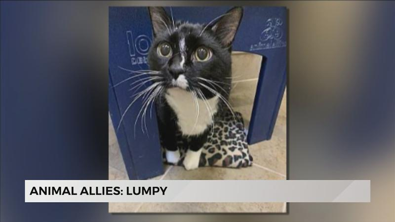 Animal Allies: Lumpy