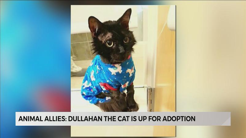 Dapper Dullahan is looking for a loving home
