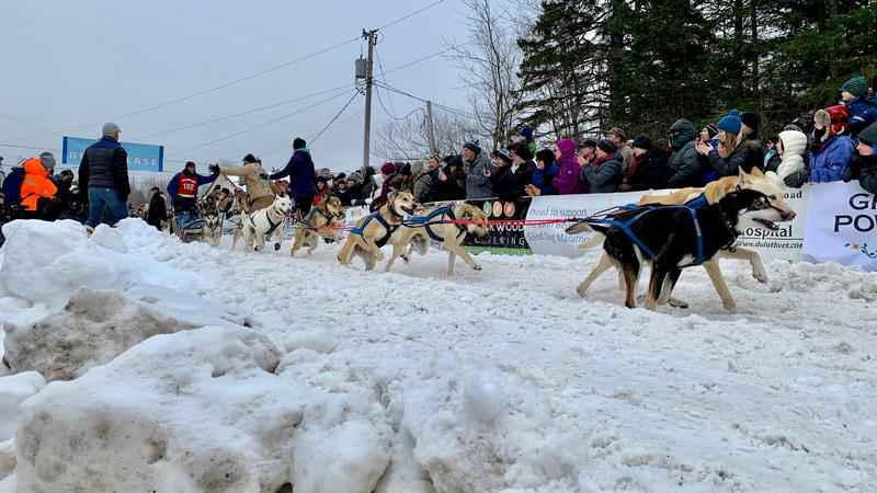 It's unlikely mushing fans will crowd the starting chute when the Beargrease kicks off on Jan. 31, 2021.