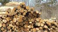 Wet weather has slowed the timber harvest in Wisconsin.