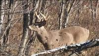 Wis. DNR Working on Tech to Pinpoint CWD Sample Origins