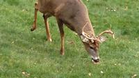 Officials Confirm Outbreak of Deer-killing Disease in Central Minn.