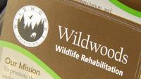 Wildwoods is temporarily suspending injured animal intake.