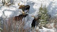 Some Michigan lawmakers believe the federal government should open Isle Royale National Park to moose hunters.
