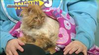 Wilbur is a shy, but sweet cat with a beautiful mane.