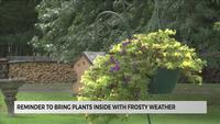 Frost possible, take action to protect sensitive plants